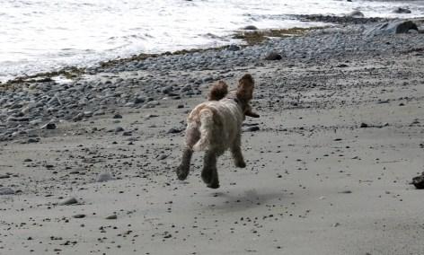 flyingdogbeach