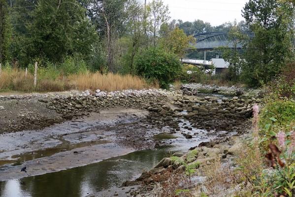 creek estuary at low tide