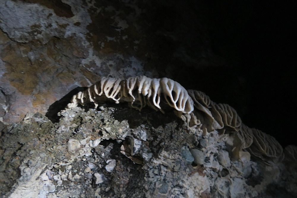 calcium aliens