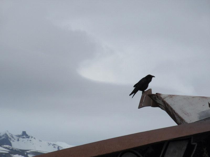 Sole crow on the wreckage of the Bridge over Skeidara