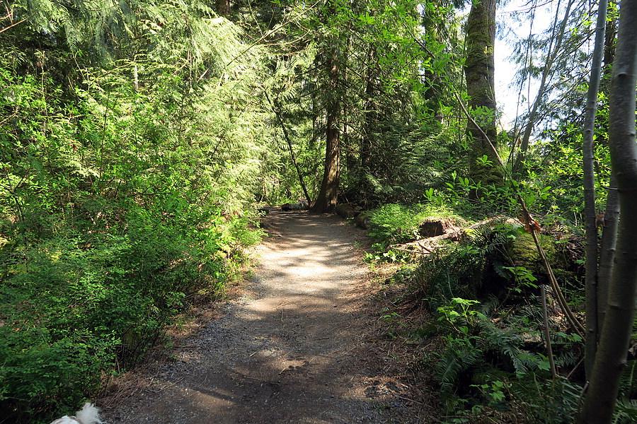 Dappled trail