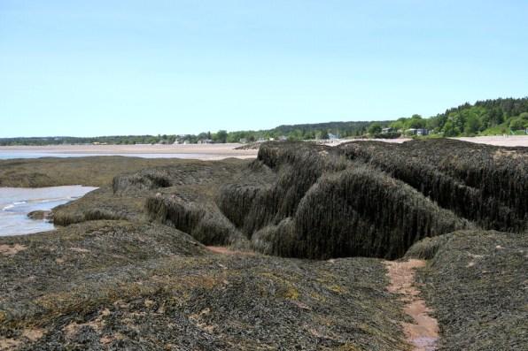 Seaweed covered rocks... or sleeping giant mermaids covered with their long hair
