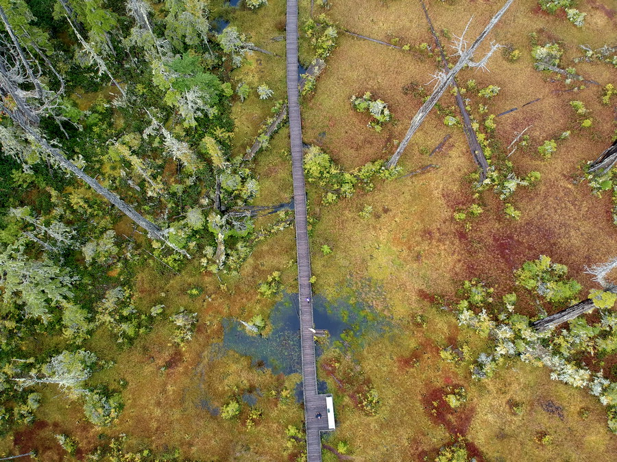 Aerial of marsh boardwalk